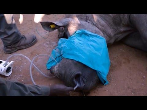 Baby rhino saved by CPR