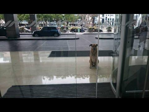 Dog waits outside hotel until flight attendant adopts him